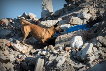 Rettungshunde-Workshop